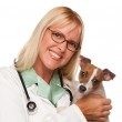 Female Doctor Veterinarian with Puppy — Stock Photo #2345107