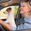 Stock Photo: Jack Russell Terrier Dog Enjoying Ride