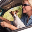 Jack Russell Terrier Dog Enjoying Ride — Stock Photo