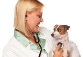 Female Doctor Veterinarian and Puppy — Stock Photo