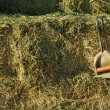 Stacked Straw Hay Bails - Stock Photo