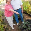 Loving Senior Couple Enjoying Gardening Together — Stock Photo #2352483
