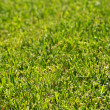 Lush Green Grass Background - Stock Photo