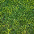 Beautiful Green Grass Background Texture — Stock Photo #2355826