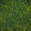 Beautiful Green Grass Background Texture — Stock fotografie