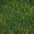 Beautiful Green Grass Background Texture — Stock Photo