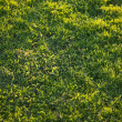 Beautiful Green Grass Background Texture — Stock Photo #2355850