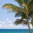 Stock Photo: Palm Trees and Tropical Waters