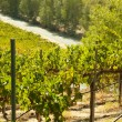 Beautiful Wine Vineyard in California, United St - 