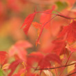 Autumn Leaves Abstract Background Image — Stock Photo