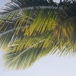 Royalty-Free Stock Photo: Backlit Palm Leaves on a Summer Day