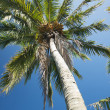 Palm Tree Against Clear Blue Sky — Stock Photo