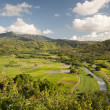 Stock Photo: Hanalei Valley and Taro Fields on Kauai