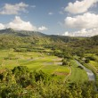 Hanalei Valley and Taro Fields on Kauai — Stock Photo