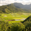 Hanalei Valley and Taro Fields on Kauai - Stock Photo