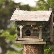 Rustic Birdhouse Amongst Pine Trees - Stockfoto