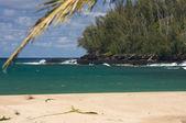 Tropical Shoreline and Trees on Kauai, Hawaii — Stock Photo