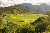 Hanalei Valley and Taro Fields on Kauai — Stock Photo