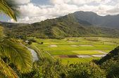 Hanalei Valley and Taro Fields on Kauai, — Stock Photo