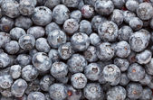 Bunch of Blueberries Background — Stock Photo