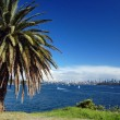 Sydney beachfront with palm tree — Stock Photo