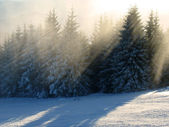 Sunlight rays in winter forest — Stock Photo