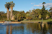 Sydney Royal Botanic Gardens lake — Stock Photo