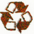 Recycling symbol made of autumn trees — Stock Photo