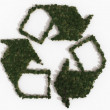 Recycling symbol made of trees — Stock Photo