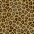 Leopard fur texture — Stock Photo