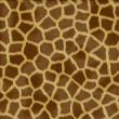Giraffe fur texture - Stock Photo