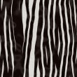 Zebra fur texture — Stock Photo