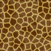 Giraffe fur texture — Stock Photo
