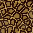 Stock Photo: Seamless jaguar or leopard fur texture