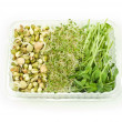 Stock Photo: Organic sprouts