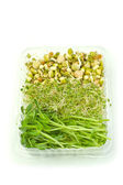 Organic sprouts — Stock Photo