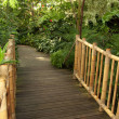 Foot bridge leading to a tropical trail — Stock Photo