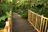 Foot bridge leading to a tropical trail — Foto Stock