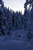 árvores nevadas — Fotografia Stock