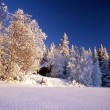 Winter forest — Stockfoto #2459609
