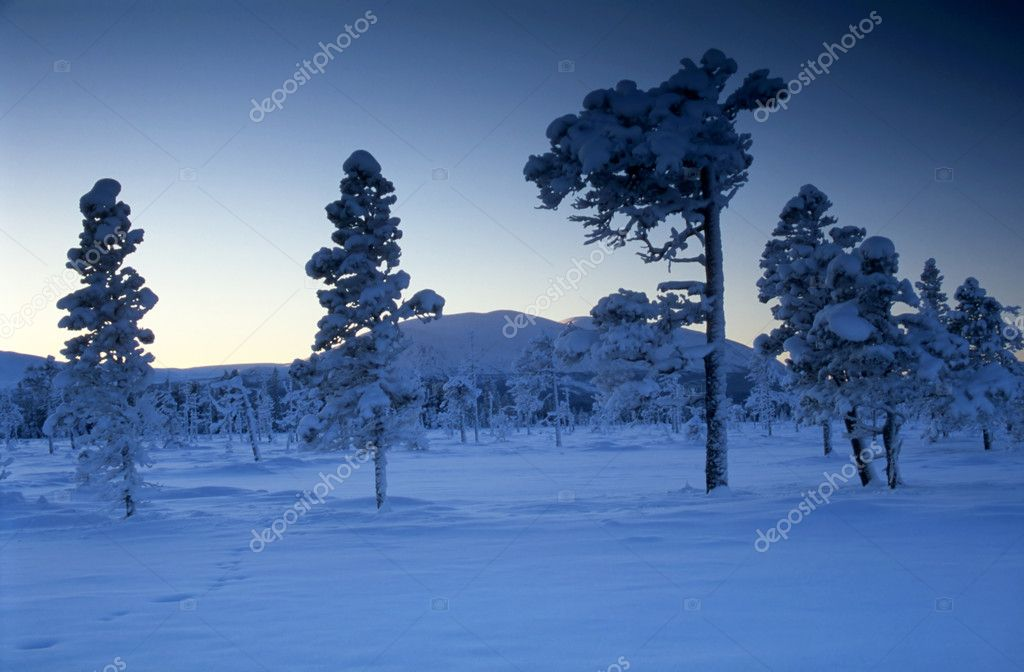 Cold winter day with snow covered trees — Stock Photo #2459346
