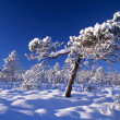 Snowy trees in forest — 图库照片 #2483646