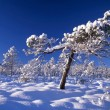 Snowy trees in forest — Stockfoto #2483646
