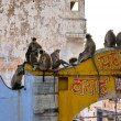 Monkeys in Jaipur, India. — Stock Photo #2332854