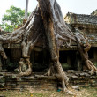 Stock Photo: Big Tree at Preah KhTemple, Angkor Wat, camb