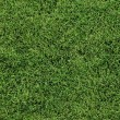 Lush Green Lawn — Stock Photo