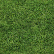 Stock Photo: Lush Green Lawn