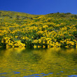 Stock Photo: Spring Hillside