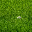 Stock Photo: Golf Ball in Green Grass