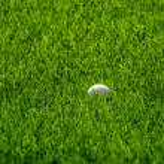 Golf Ball in Green Grass — Stock Photo